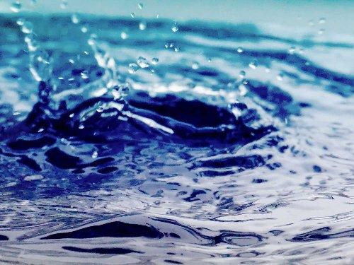 Best Rain Barrels to Help You Conserve Water