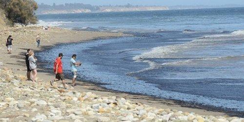 Seltsamer Fund in Kalifornien: Grusel-Foto: Bizarres Seeungeheuer an kalifornischem Strand angespült