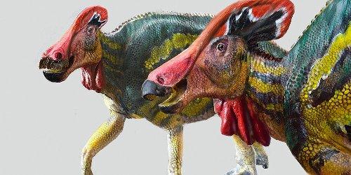 Tlatolophus galorum: Friedlich und kommunikativ: Neue Dinosaurierart in Mexiko entdeckt