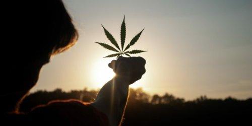 Finanztipps: Rentabel oder unmoralisch? Was Sie über Cannabis-Aktien wissen sollten