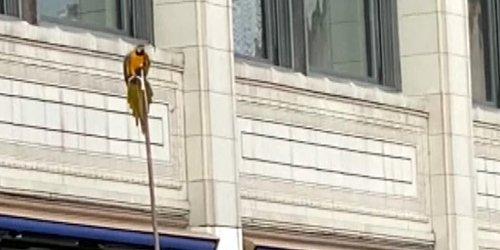 Kurioser Rettungseinsatz: Mitten in Chicago: Papagei von Feuerwehr gerettet – Menge jubelt Vogel zu