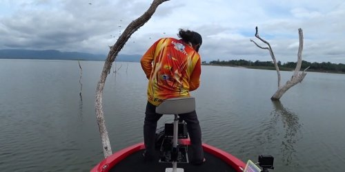 Er hatte keine Wahl: Angler trifft auf Hornissennest und sieht nur einen Ausweg