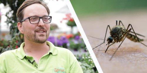 Garten und Balkon: Wenn Sie diese Pflanze anbauen, suchen Mücken rasch das Weite