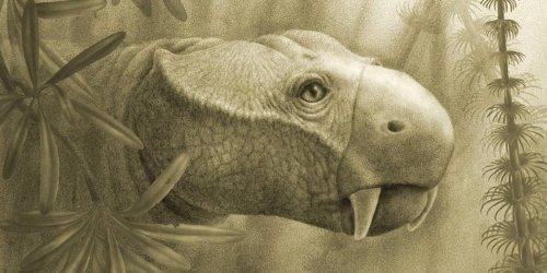 Warum nur Säugetiere Stoßzähne haben