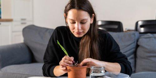 """Interview mit Carolin Engwert: """"Indoor-Ernte"""": Wie das eigene Wohnzimmer zum Garten wird"""