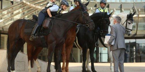 NRW will Polizeireiterstaffel etwas aufstocken