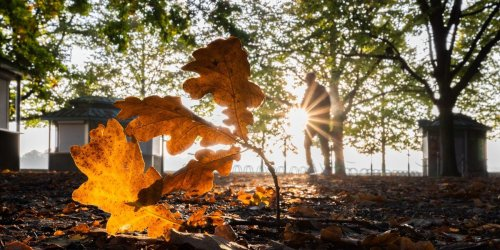 Kühles und trockenes Herbstwetter in Berlin und Brandenburg