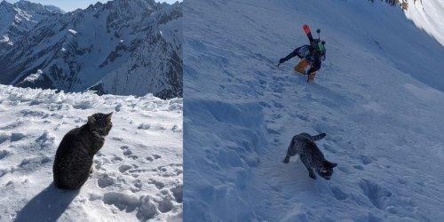 In Eis und Schnee verlaufen: Bergsteiger überholt: Kätzchen bezwingt drei Mal Dreitausender
