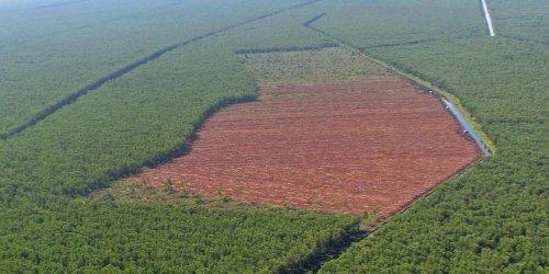 Soja, Palmöl, Rindfleisch: WWF-Bericht: EU-Importe verursachen Tropenwald-Abholzung in großem Ausmaß
