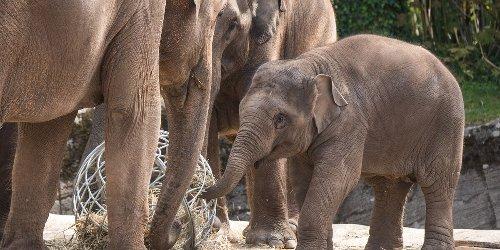 Hagenbeck-Chef: Existenz des Tierparks nicht gefährdet