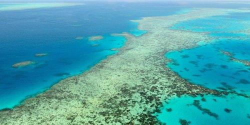 Bedrohte Schönheit: Forscher zeigen erschreckende Studie: Korallenriffe haben sich weltweit halbiert