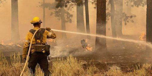 Kalifornien: Kreative Idee von Feuerwehr soll Mammutbäume vor Flammen retten