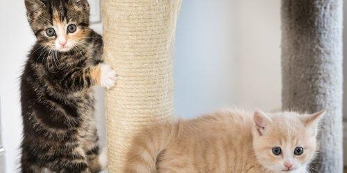 Zeugen gesucht : Zwei Kätzchen am Treuchtlinger Bahnhof ausgesetzt - Polizei bittet um Hinweise