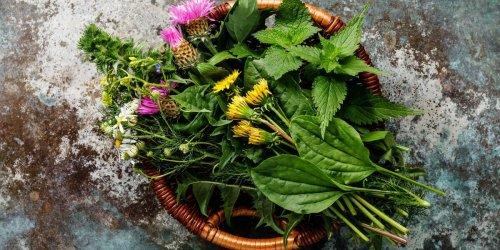 Statt Chemiekeule: Diese 15 Heilpflanzen helfen bei Schmerzen, Infekten oder Einschlafproblemen