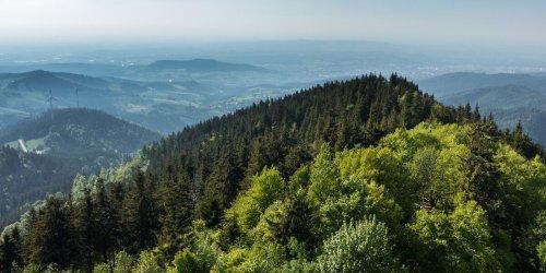 Das können Sie für den Schutz der Wälder tun