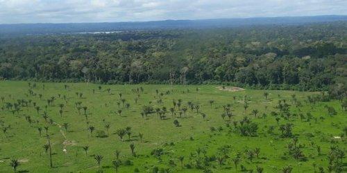 """Klimaschutz: Bundesentwicklungsminister fordert """"Fair Deal"""" für globale Regenwälder"""