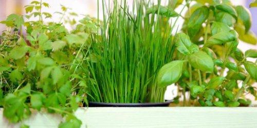 Küchtentipps: Kräuter in der Küche: Die besten Tricks für einen Kräutergarten auf der Fensterbank