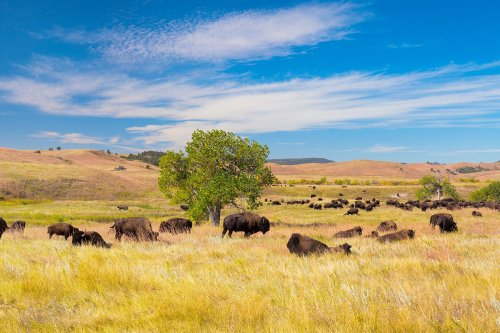 10 Unexpected Places in the United States for Wildlife Lovers