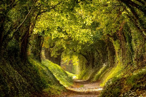 9 Terrific Tree Tunnels Around the World