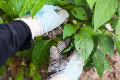 4 Steps to a (Sort of) Bug-less Garden