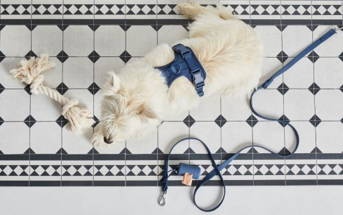 How to Clean Pet Urine (Ugh) From Any Surface at Home