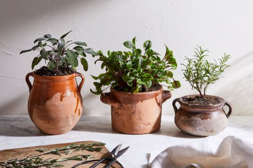 10 Vegetables That Thrive in Pots, No Garden Required