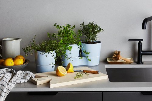 8 Things to Know About Growing Your Own Herbs