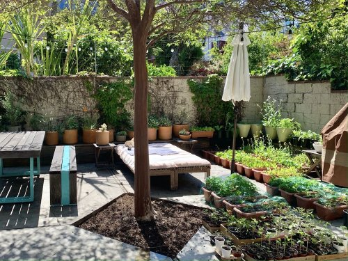 A Newbie-Friendly Guide to Starting a Vegetable Garden
