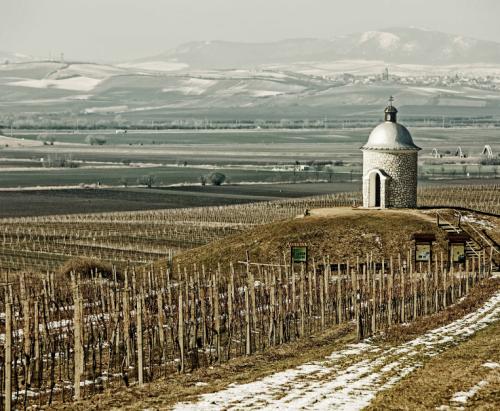 Repubblica Ceca e Slovacchia: laboratorio vino - Food&Wine Italia