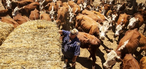 JBS USA is spending $130M to boost beef capacity amid growing demand