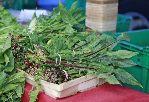 8 Edible Weeds To Start Foraging
