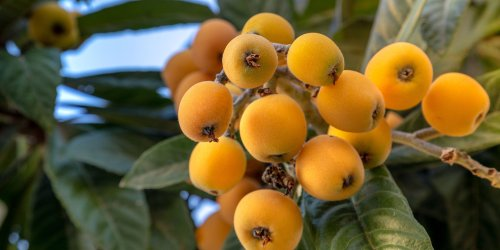 7 Instagram Accounts For Learning About Tropical Fruit