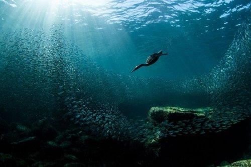 For Bird Lovers: 10 Inspiring Photos, Winners Of Audubon Photography Awards 2020