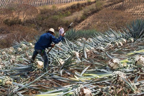 Big Sales, No Agave: A Look At 2020 In The Tequila Industry