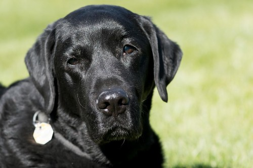 How Old Is Your Dog Really In Human Years? Science Might Have An Answer