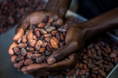 What Is The Sweet Solution To The Issue Of Child Labor In Cocoa Trade?