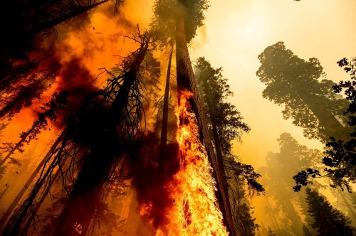 California's Giant Sequoias Are Burning