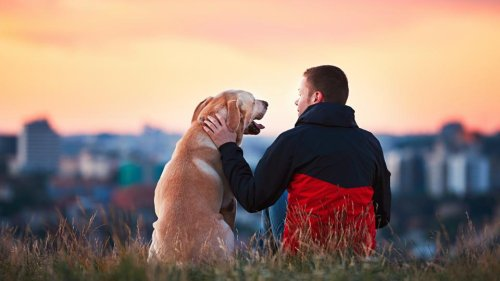 Best Cities For Dogs 2021