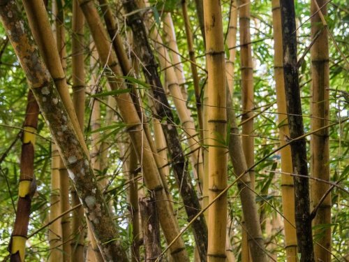 How Jamaica Is Rebuilding Its Economy Using Sustainable Bamboo