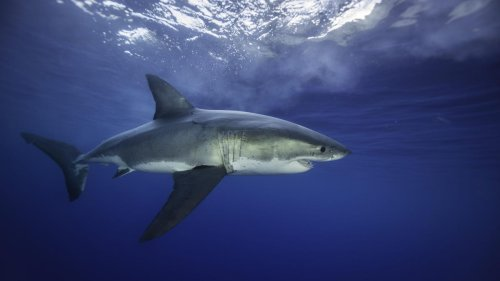 Technology Might Save Us From Shark Bites