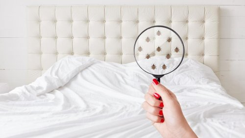 Does Renters Insurance Cover Bed Bugs?