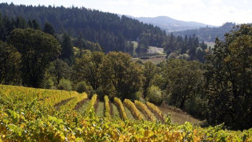 Wine Spectator's Top 100 Wines Of 2020 Features Seven Oregon Producers
