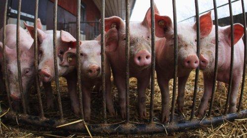 China's Exports Of Amino Acids Threatens A Critical U.S. Market