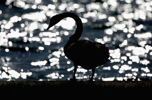 No Black Swan: This 8-Year Cycle Warned Of Brexit, Trouble Ahead