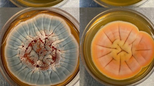 This Biotech Startup Just Raised $47 Million To Make Drugs From Fungi