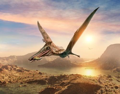 It's Not A Bird Or A Plane - It's A New Species Of Flying Dinosaur