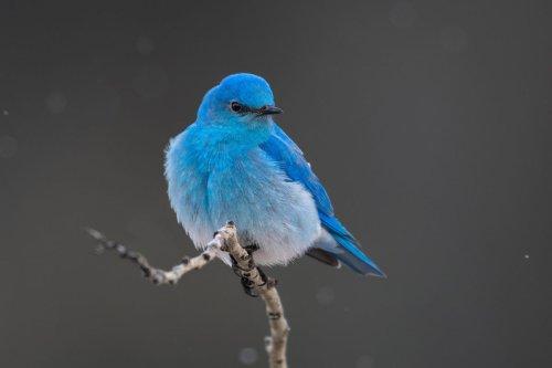 More Birds Make You As Happy As More Money