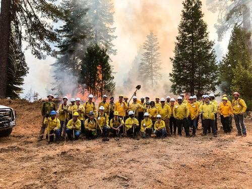 Forests That Survive Megafires Prove Good Management Trumps Climate Change