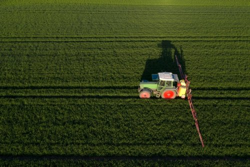Glyphosate Exposure Could Disrupt Human Gut Microbiome