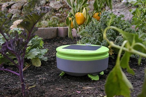 Tertill Is A Gardening And Weeding Robot From The Inventors Of Roomba